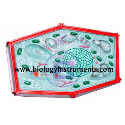 Plant Cell Magnified