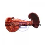 Human Pancreas, Duodenum and Spleen