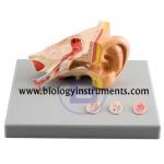 Ear Diseases Model